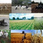 هدفمندی یارانه بخش کشاورزی