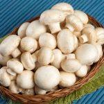ورود انجمن پرورش دهندگان قارچ خوراکی به صدور پروانه ها