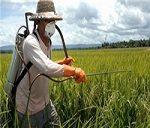 رفع مشکل کشاورزان با عرضه محصولات کشاورزی در بورس کالا