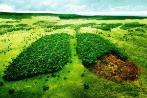 حفاظت از محیط زیست و فضاهای سبز یک وظیفه ملی است