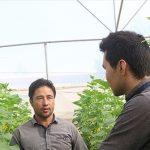 نظام مهندسی کشاورزی خراسان شمالی نهصد و شصت و چهار شغل ایجاد کرد