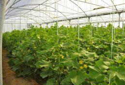 حذف استعلامهای اضافی برای صدور مجوز گلخانه در فارس