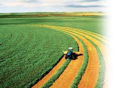 افزایش اجرای طرح های علمی و پژوهشی در حوزه کشاورزی زرندیه