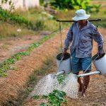 اجرای طرح کاشت محصولات کشاورزی علمی محور در اردبیل