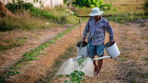 دانش آموختگان کشاورزی فاقد مهارت عملی هستند