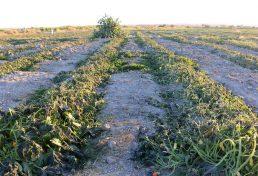 بی توجهی دستگاههای دولتی به ظرفیت نظام مهندسی کشاورزی خوزستان