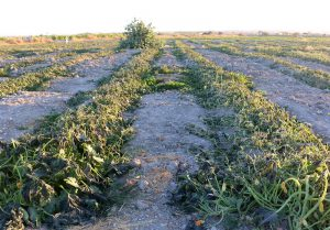 فنی محور شدن تولیدات محصولات کشاورزی اردبیل