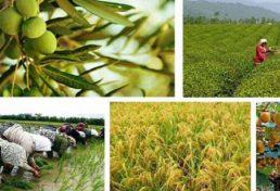 سهم بیش از سه میلیون تنی گیلان در تولید محصولات کشاورزی