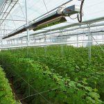 حمایت نظام مهندسی کشاورزی استان قزوین از توسعه گلخانه ها