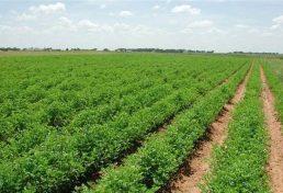 ایجاد مراکز خدمات کشاورزی غیردولتی در سیستان و بلوچستان