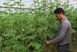 بیکاری هفت هزار مهندس کشاورزی در استان آذربایجان غربی