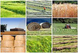 نهاد شدن علم مهندسی در محصولات کشاورزی