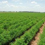 اضافه شدن شصت هکتار به گلخانههای خراسان شمالی