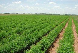فعالیت دوازده شرکت فنی مهندسی استان قم در طرح پهنه بندی کشاورزی