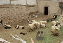 مجوزدار شدن واحدهای دامداری کوچک روستایی استان خراسان شمالی