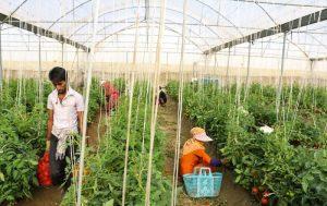 کم کردن سختگیری بانکها برای کشاورزان