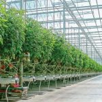 توسعه گلخانهها، تحقق رونق تولید در زمینه کشاورزی
