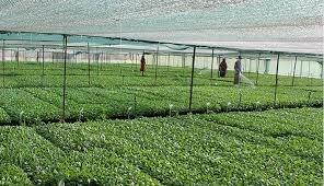 ساماندهی فارغالتحصیلان بخش کشاورزی
