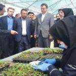 افزایش بهره وری کشاورزی با تقویت شرکتهای دانش بنیان