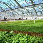 افزایش ظرفیت کشت گلخانه ای قم