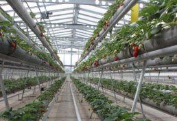 تشویق کشاورزان برای کشت گلخانهای