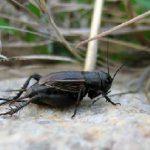 تکثیر حشرات در وفور نعمت