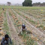 واگذاری امور به بخش غیردولتی در سازمان نظام مهندسی کشاورزی