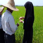 هزار و دویست مهندس ناظر آماده خدمت به کشاورزان کرمانی