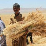 نیاز به سی و شش هزار پهپاد در بخش کشاورزی کشور