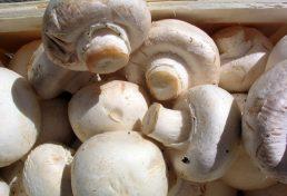 طریقه گرفتن مجوز پرورش قارچ