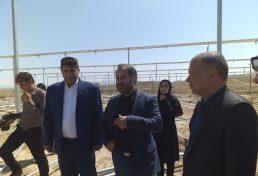 ایران سازه گلخانهای صادر می کند