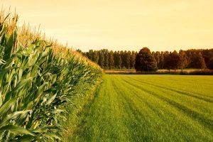 آموزش مدیریت منابع اب و خاک در مراکز خدمات کشاورزی