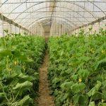 صدور مجوز تاسیس گلخانه در هرمزگان کمتر از 1 روز