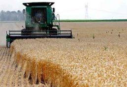 کاهش دو درصدی ریزش و ضایعات گندم و جو در استان آذربایجان شرقی