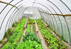 صدور سیصد و هفتاد و نه مجوز پروانه تأسیس گلخانه در خراسانجنوبی