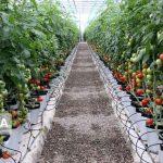 بازدید خبرنگاران استان یزد روز 2 شنبه از واحدهای گلخانه ای مهریز