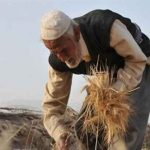 مهندس گریزی و نیروی انسانی ضعیف،دو چالش اصلیبخش کشاورزی