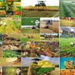 جبران فرصت های از دست رفته کشاورزی کرمانشاه با قطبیت کشاورزی