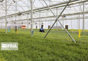 افزایش سطح تولید محصولات بخش کشاورزی استان قم با بکارگیری مسئولان فنی