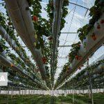 دانشافزایی در بخش کشاورزی کارآمدترین و موثرترین راهکار پشتیبانی از تولید