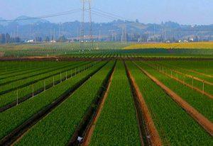 تسریع و تسهیل صدور مجوز فعالیت های کشاورزی برای جذب سرمایههای مردمی
