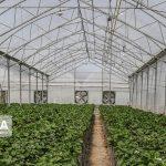 روند احداث گلخانههای استان قم و لزوم تسهیل شرایط راهاندازی آنها در سالجاری