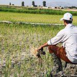 خشکسالی و افزایش قیمت نهادهها دو چالش عمده پیش روی کشاورزان