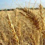 نشست خبری به مناسبت بیستمین سالروز تأسیس سازمان نظام مهندسی کشاورزی و منابع طبیعی