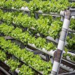 راهاندازي پاركهاي سلامت و مزارع نمونه و الگويي در حوزه علوم كشاورزي