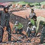 سازمان نظام مهندسی کشاورزی به عنوان فراگیرترین نهاد مردمی و دانشی در بخش کشاورزی