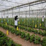 زمینه اشتغال چهارصد نفر در طرح های حوزه کشاورزی استان بوشهر